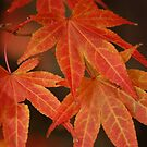 Autumn Leaves (Red) by Matthew Folley