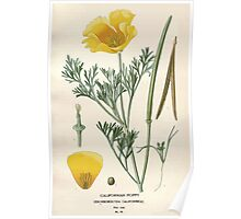 Favourite flowers of garden and greenhouse Edward Step 1896 1897 Volume 1 0066 Californian Poppy Poster
