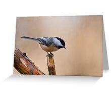 Black Capped Chickadee on Branch - Ottawa, Ontario Greeting Card