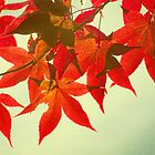 Japanese Maple in Fall by Constance Janik