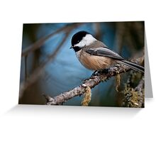 Chickadee on Branch - Ottawa, Ontario  - 2 Greeting Card