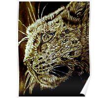 The Hunt-Snow Leopard Eyes Prey Poster