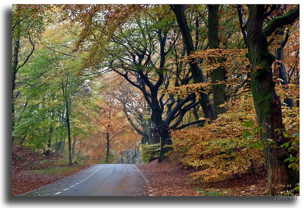 A normal day during Fall in Holland by John44