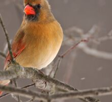 Female Northern Cardinal Sticker