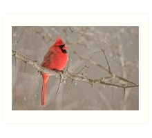 Male Northern Cardinal Art Print