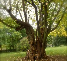 Paper Mulberry Tree at Monticello - Virginia, US by Jack McCabe