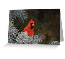 Male Northern Cardinal - Ottawa, Ontario Greeting Card