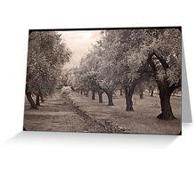 A walk through an olive grove  Greeting Card