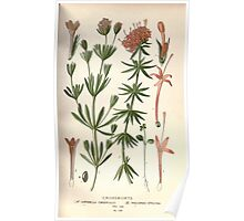 Favourite flowers of garden and greenhouse Edward Step 1896 1897 Volume 2 0145 Crossworts Poster