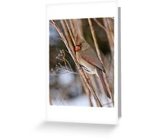 Female Northern Cardinal - Ottawa Ontario Greeting Card