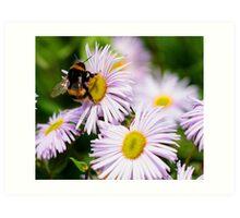Nectar! Art Print