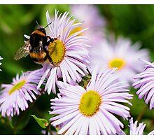 Nectar! Photographic Print
