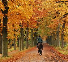 Riding on the autumn lane again by jchanders