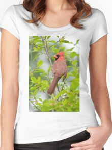 Northern Cardinal Women's Fitted Scoop T-Shirt