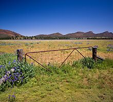 Paddock gate in the Flinders Ranges, SA by Richard  Windeyer