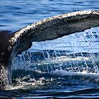 Humpback Whale Tail by Artist Dapixara
