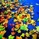 Autumn Leaves by Richard Pitman