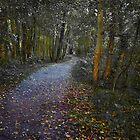 Woodland Walk by Geoff Carpenter