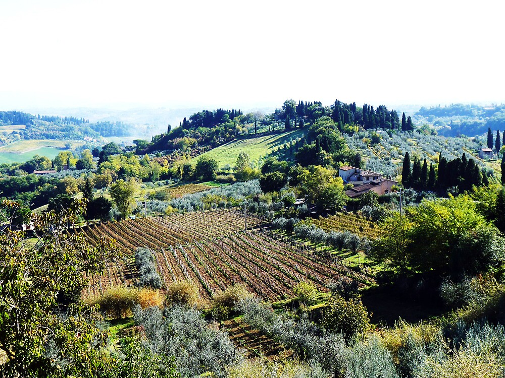 Vineyards and Olive Groves. by artfulvistas