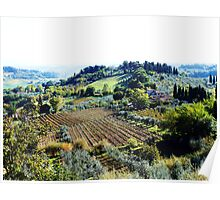 Vineyards and Olive Groves. Poster