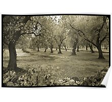 Olive grove and rock wall Poster