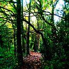 Follow me... by Richard Pitman