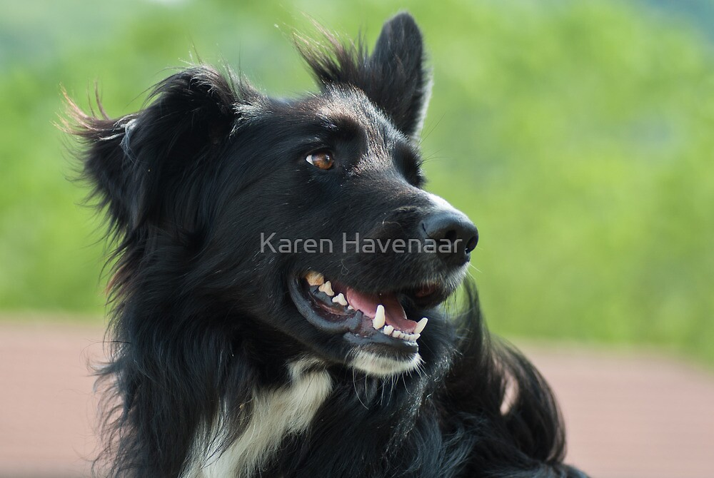 Portrait by Karen Havenaar
