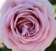 Pink by Jenni Matthews