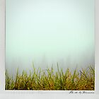 Grass Polaroïd by Laurent Hunziker
