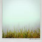Grass Polaroïd by Laurent Hunziker