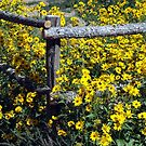 Corraled Wildflowers by Loree McComb