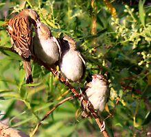 Bird Feeding by Syed Rizwan Ali