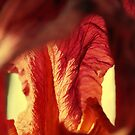 Burgandy Arms by Lozzar Flowers & Art