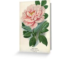 Favourite flowers of garden and greenhouse Edward Step 1896 1897 Volume 1 0003 Tree Peony Greeting Card