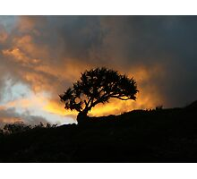 Lone Tree in the Sunset Photographic Print