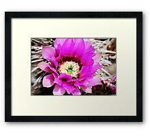 Brillient Bloom Framed Print