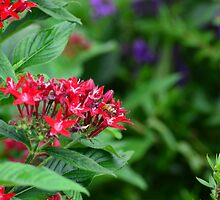 Red Flowers by pacoce1