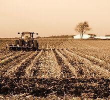 Harvested by K. Strangeway Photography