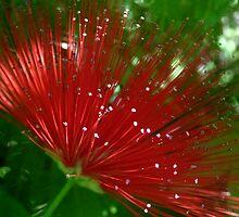 Crimson Sparkle by Emma Sterling