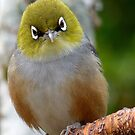*Priceless Expressions For The Year* - Silvereye - New Zealand by AndreaEL
