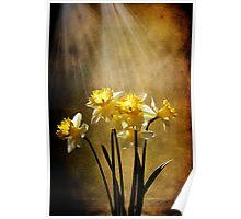 Spring Sun Poster