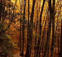 Bright Path! by vasu
