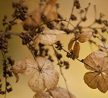 Beauty of Dry Leaf! by vasu