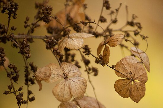 Beauty of Dry Leaf! by vasu