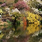 Rhododendron Reflections by michellerena