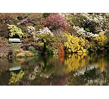 Rhododendron Reflections Photographic Print