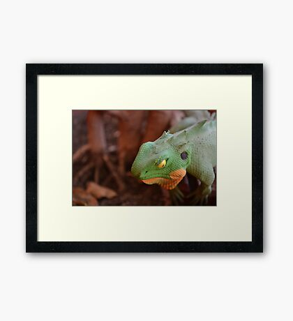 The Coloured Reptile Framed Print