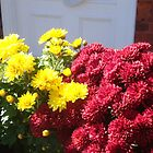 Beautiful Chrysantimums by Peggy Burch