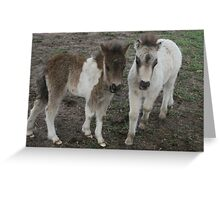Pony Foals- Maldon,Victoria Greeting Card