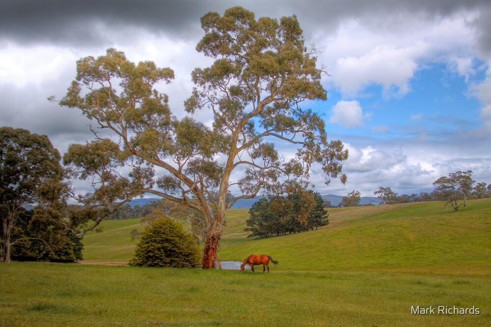 Blakiston - Mattners Rd - Balhanna, Adelaide Hills, South Australia by Mark Richards